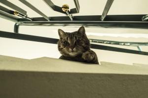 Cestování s kočkou 2