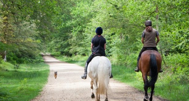 Výsledek obrázku pro jízda na koni obrázek